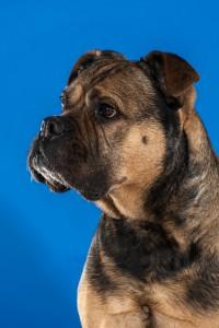 Hondenfotografie in de studio