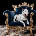 Hondenfotograaf Frans Lamping