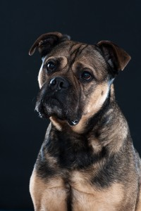 hond op de foto (2)kl