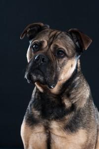 Frans Lamping  Hondenfotografie