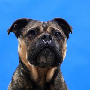 honden portretkl