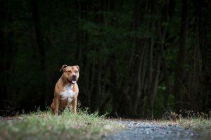 Het bos in met je hond