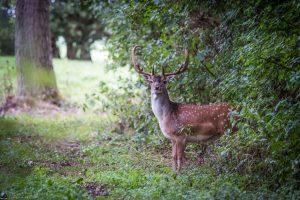 Natuurfotografie in de Hoeksche waard